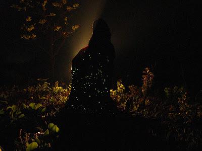 Cumpim bioluminescente Parque das Emas Mineiros